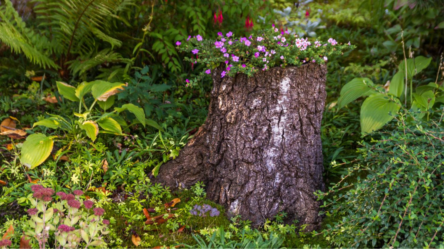How to know when a tree stump removal is necessary